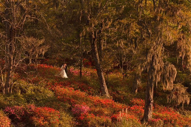 middleton plantation wedding photographers
